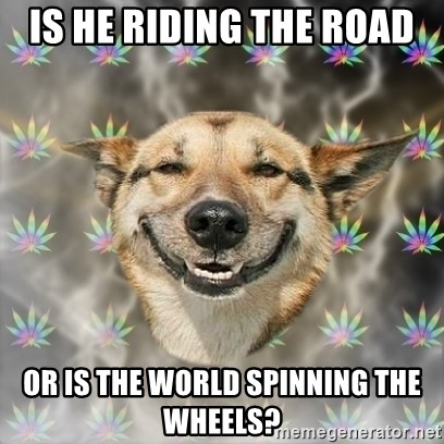 Stoner Dog - is he riding the road  or is the world spinning the wheels?