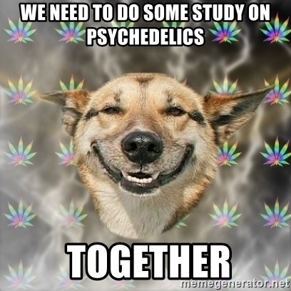 Stoner Dog - we need to do some study on psychedelics  together