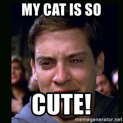 crying peter parker - MY CAT IS SO CUTE!