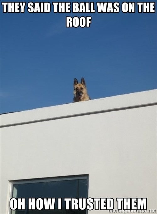 Roof Dog - THEY SAID THE BALL WAS ON THE ROOF  OH HOW I TRUSTED THEM