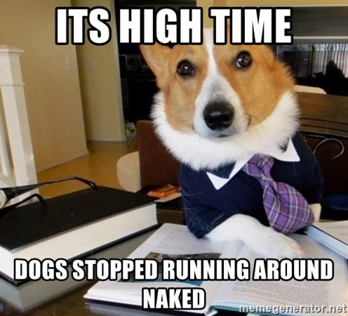Dog Lawyer - its high time dogs stopped running around naked