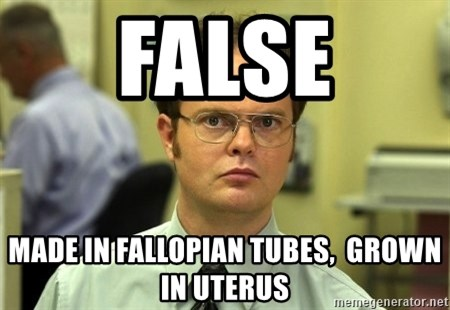 False guy - false made in fallopian tubes,  grown in uterus