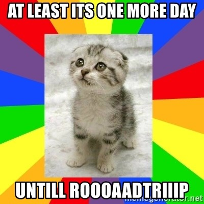 Cute Kitten - at least its one more day untill roooaadtriiip