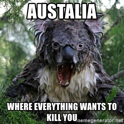 Wet Koala - austalia where everything wants to kill you
