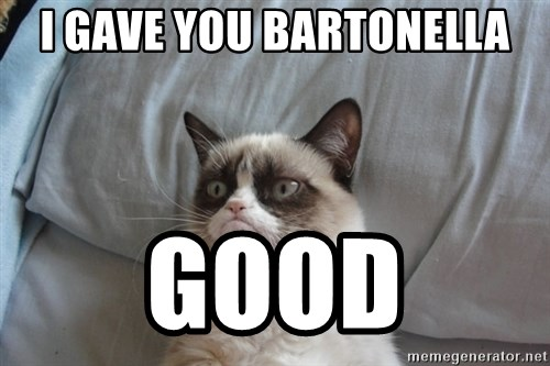 Grumpy cat good - I gave you Bartonella good