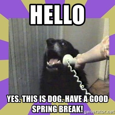 Yes, this is dog! - Hello yes. this is dog. Have a good spring break!