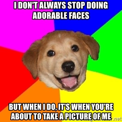 Advice Dog - I don't always stop doing adorable faces but when i do, it's when you're about to take a picture of me