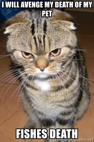 angry cat 2 - I WILL AVENGE MY DEATH OF MY PET FISHES DEATH