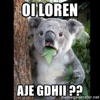 Koala can't believe it - OI LOREN AJE GDHII ??