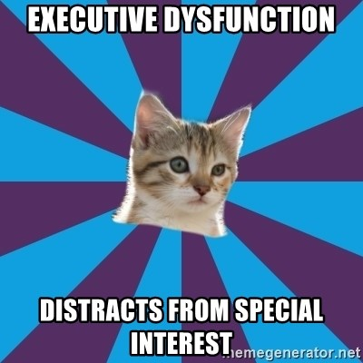 Autistic Kitten - EXECUTIVE DYSFUNCTION distracts from special interest
