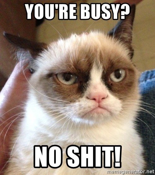 Mr angry cat - You're Busy?  No shit!