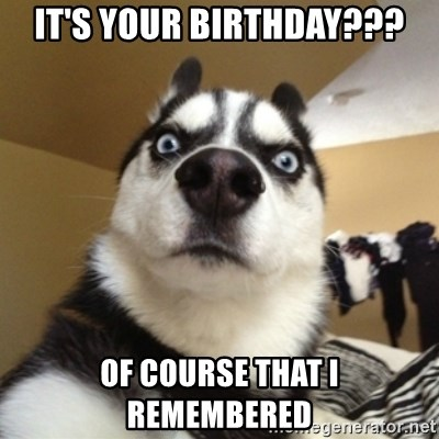 Surprised Husky - It's your Birthday??? Of course that I remembered