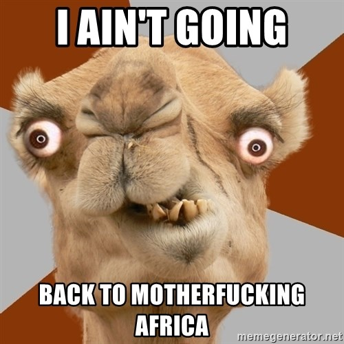 Crazy Camel lol - I AIN'T GOING BACK TO MOTHERFUCKING AFRICA