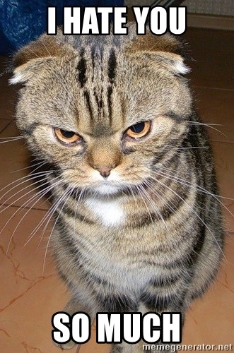 angry cat 2 - I hate you so much