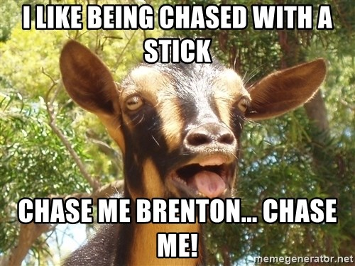 Illogical Goat - I LIKE BEING CHASED WITH A STICK Chase me Brenton... Chase me!