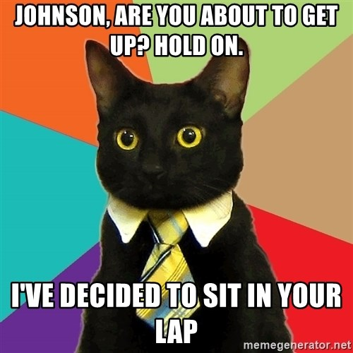Business Cat - Johnson, are you about to get up? Hold On. I've decided to sit in your lap