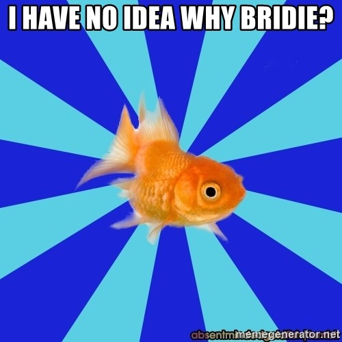 Absentminded Goldfish - I have no iDEA why Bridie?