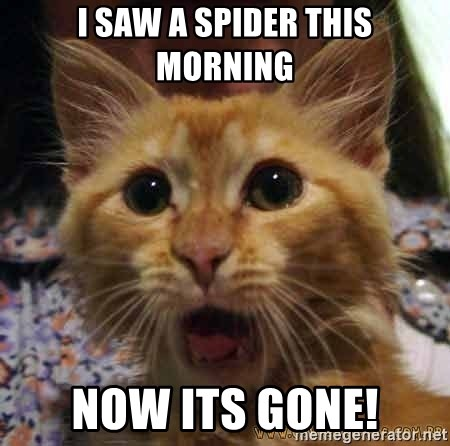 Crazy cat - I saw a spider this morning Now its gone!