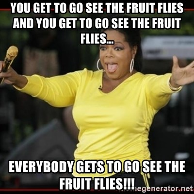 Overly-Excited Oprah!!!  - You get to go see the fruit flies and you get to go see the fruit flies... everybody gets to go see the fruit flies!!!