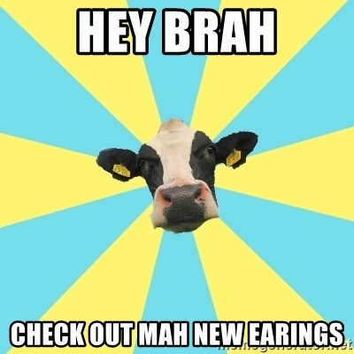 Comparatist Cow  - hey brah check out mah new earings