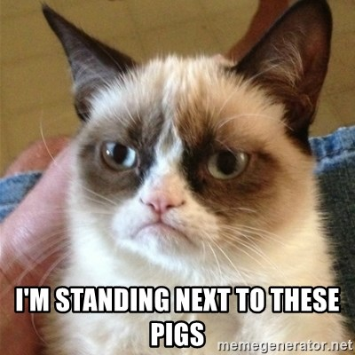 Grumpy Cat  -  I'm standing next to these pigs