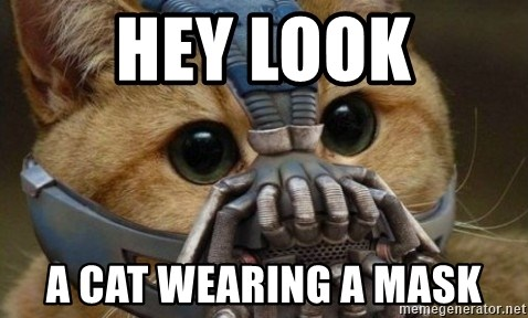 bane cat - HEY LOOK A CAT WEARING A MASK
