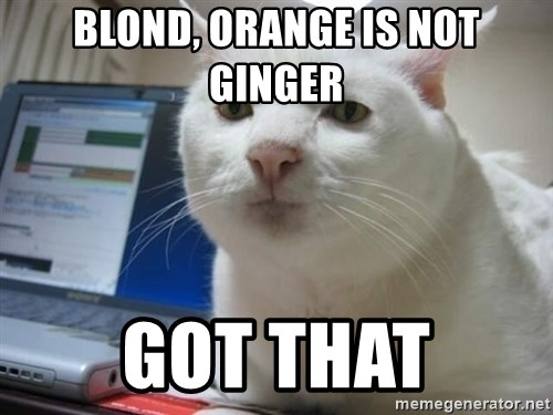 Serious Cat - blond, orange is not ginger got that