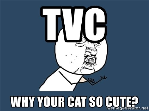 Y U No - TVC Why your cat so cute?
