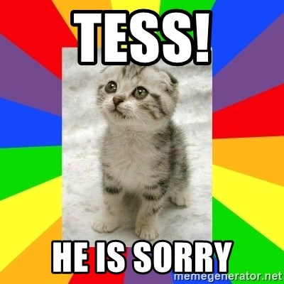 Cute Kitten - tess! He is sorry