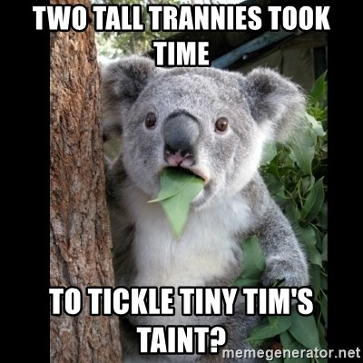 Koala can't believe it - two tall trannies took time  To tickle tiny tim's taint?
