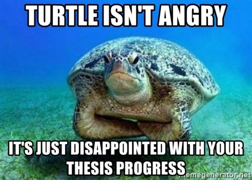 disappointed turtle - turtle isn't angry it's just disappointed with your thesis progress