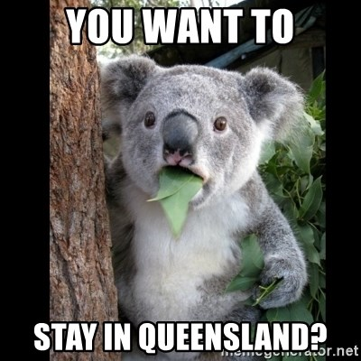 Koala can't believe it - you want to stay in queensland?