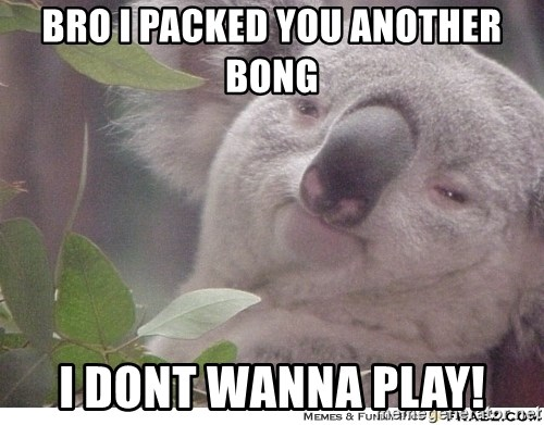 High koala - Bro i packed you another bong i dont wanna play!