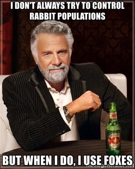 The Most Interesting Man In The World - I DON'T ALWAYS TRY TO CONTROL RABBIT POPULATIONS BUT WHEN I DO, i USE FOXES