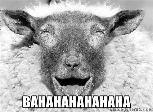 Laughing Sheep -  Bahahahahahaha