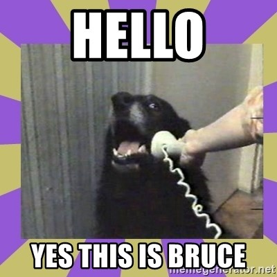Yes, this is dog! - HELLO YES this is bruce