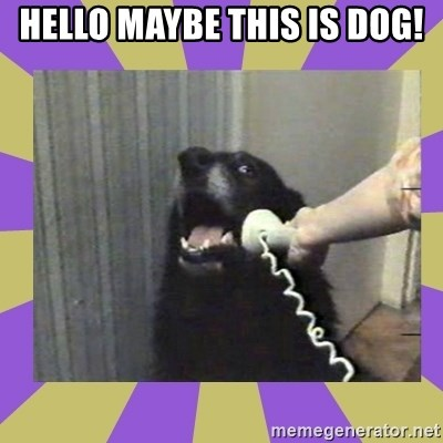 Yes, this is dog! - HELLO MAYBE THIS IS DOG!
