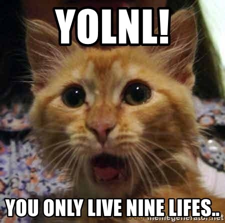 Crazy cat - YOLNL! YOU ONLY LIVE NINE LIFES..