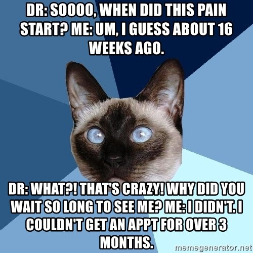 Chronic Illness Cat - DR: Soooo, when did this pain start? Me: Um, I guess about 16 weeks Ago.  Dr: What?! That's crazy! Why did you wait so long to see me? Me: I didn't. I couldn't get an appt for over 3 months.