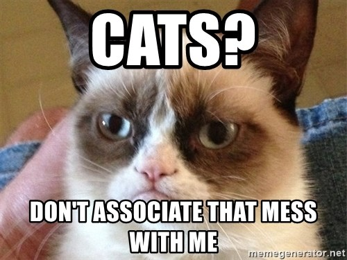 Angry Cat Meme - CATS? Don't associate that mess with me