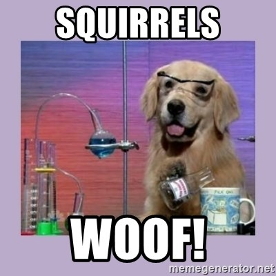 Dog Scientist - SQUIRRELS WOOF!
