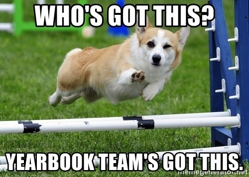 Ridiculously Photogenic Corgi  - Who's got this? Yearbook Team's got this.