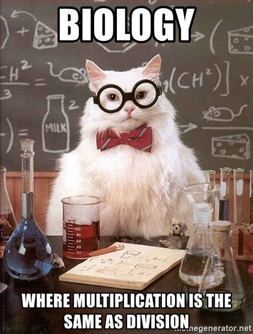 Science Cat - Biology where multiplication is the same as division