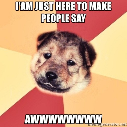 Typical Puppy - i'am just here to make people say AWWWWWWWW