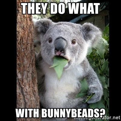 Koala can't believe it - They do what with bunnybeads?