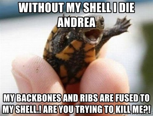 angry turtle - without my shell i die andrea my backbones and ribs are fused to my shell.! are you trying to kill me?!