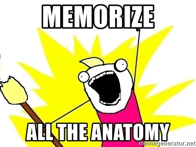 X ALL THE THINGS - Memorize All the anatomy