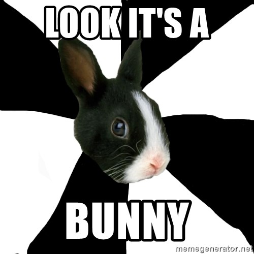 Roleplaying Rabbit - LOOK IT'S A  BUNNY