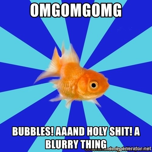 Absentminded Goldfish - OMGOMGOMG Bubbles! aaand holy shit! a blurry thing