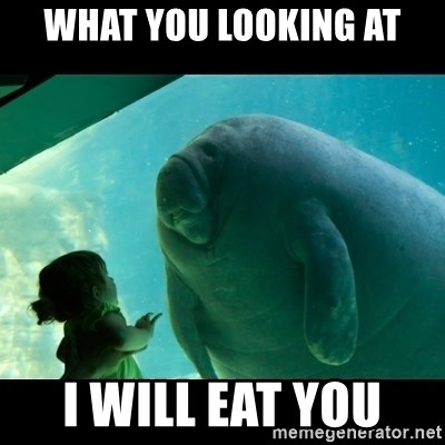 Overlord Manatee - WHAT YOU LOOKING AT I WILL EAT YOU